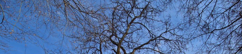 Photo arbre meditation pleine conscience